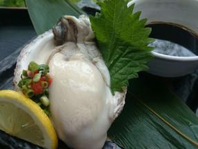 ことぶき寿司 岩牡蠣入荷しました!