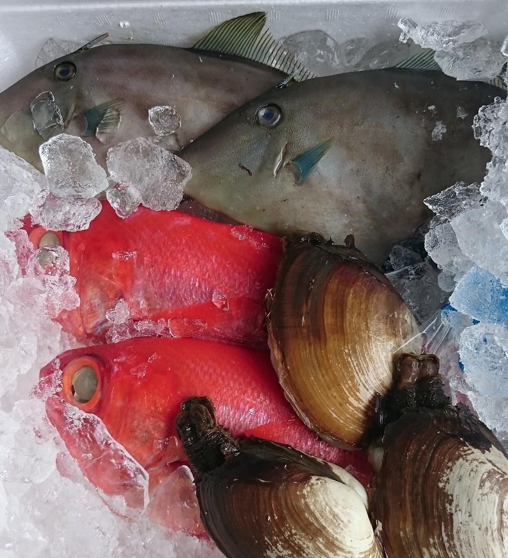 市場直送尾の鮮魚