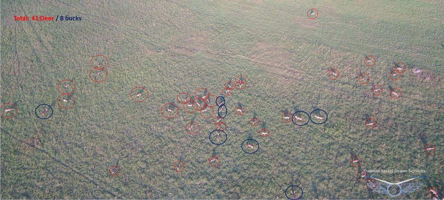 Aerial deer counting sample 1