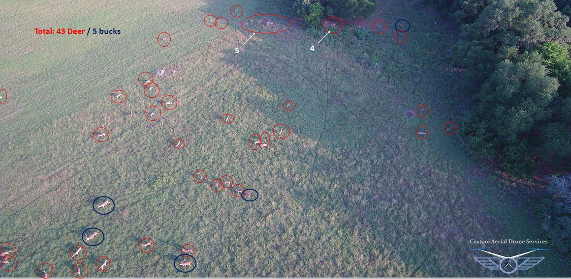Deer counting by drone