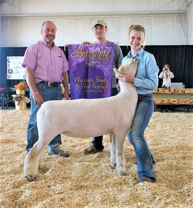 Supreme Champion Ewe