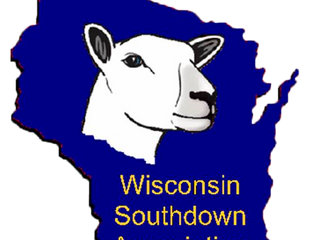 Wisconsin Southdown Stars Sale