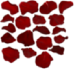 rose_petals_by_two_ladies_stocks.png