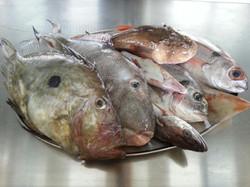 pesce fresco tutti i giorni