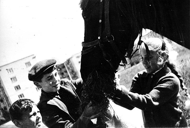 Лошади – непроходящая любовь