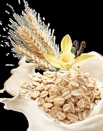 oat_wheat.png