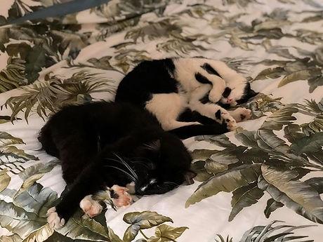 Our little Jungle Kitties 💕.jpg
