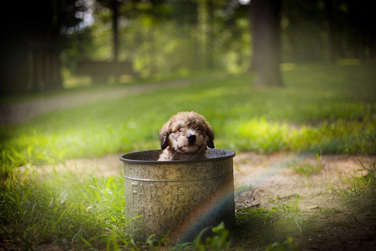 puppy2d.jpg