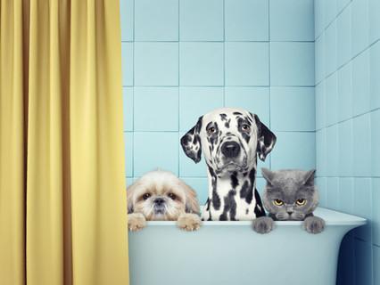 Evcil Hayvanlar İçin Deprem Çantasına Neler Koyabiliriz?