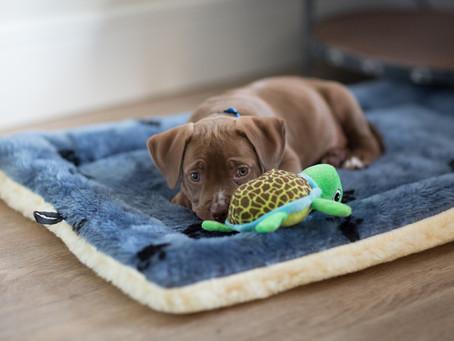 """İlk Defa Köpek Sahibi Olacaklar İçin """"Köpek Başlangıç Kiti"""""""