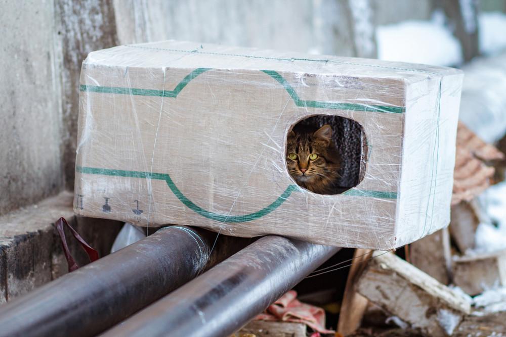 soğuk kış gününde sokak kedisi