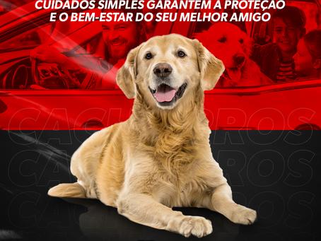Viagem com cachorros: Cuidados simples garantem a proteção e o bem-estar do seu melhor amigo