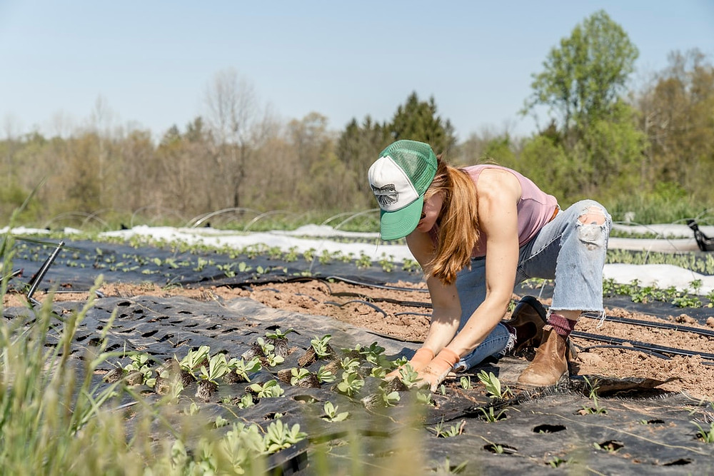 Woman in baseball cap and work boots planting in a field