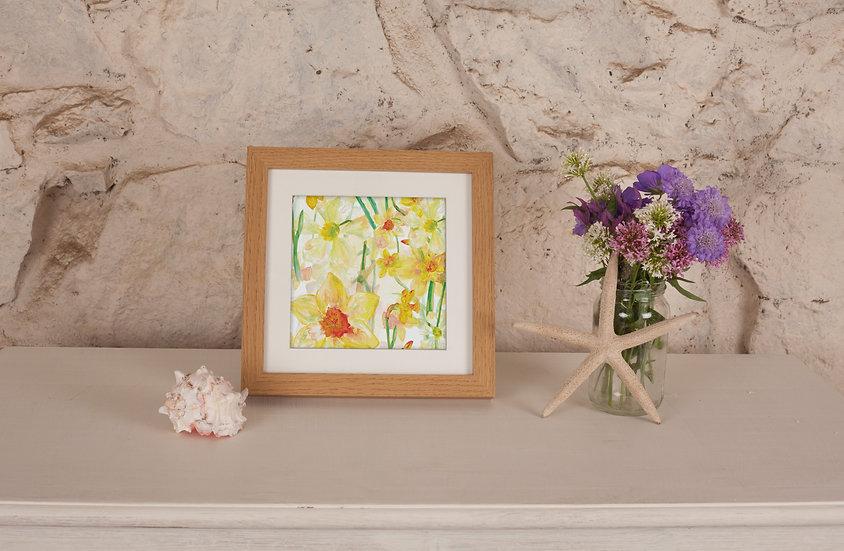 'Daffodil Blooms' Print