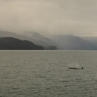 Orkafamilie, Resurrection Bay