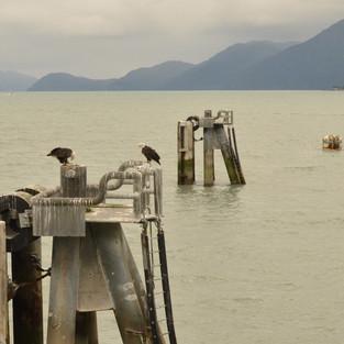 Seeadler, Resurrection Bay