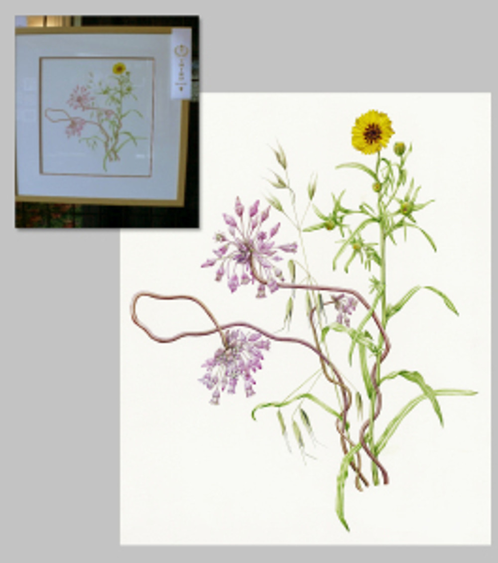 Snake Lily & Elegant Madia, Third Place, by Joan Keesey, watercolor © 2012