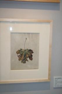 Jean Emmons Maple Leaf