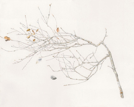 """""""Cat & Bird,"""" Quercus agrifolia (Coast Live Oak). Graphite and colored pencil on paper by Jan Clouse, © 2018."""
