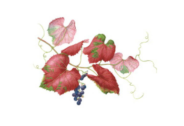 Roger's Red Grape, watercolor by Lee McCaffree, © 2017.