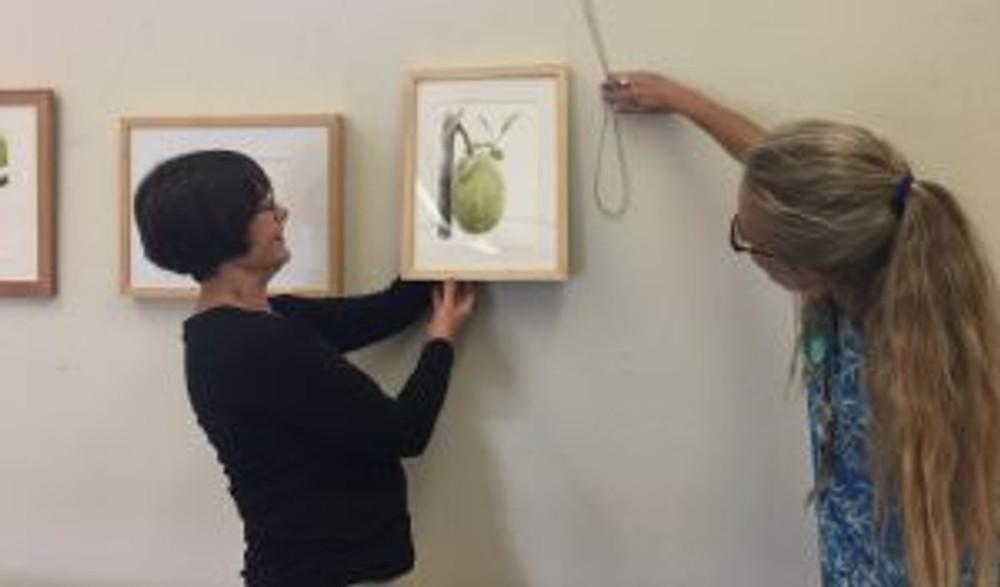 Janice Sharp (left) and Lesley Randall (right) hang Olga Ryabtsova's painting of a Jackfruit. Photo by Olga Ryabtsova, © 2017.