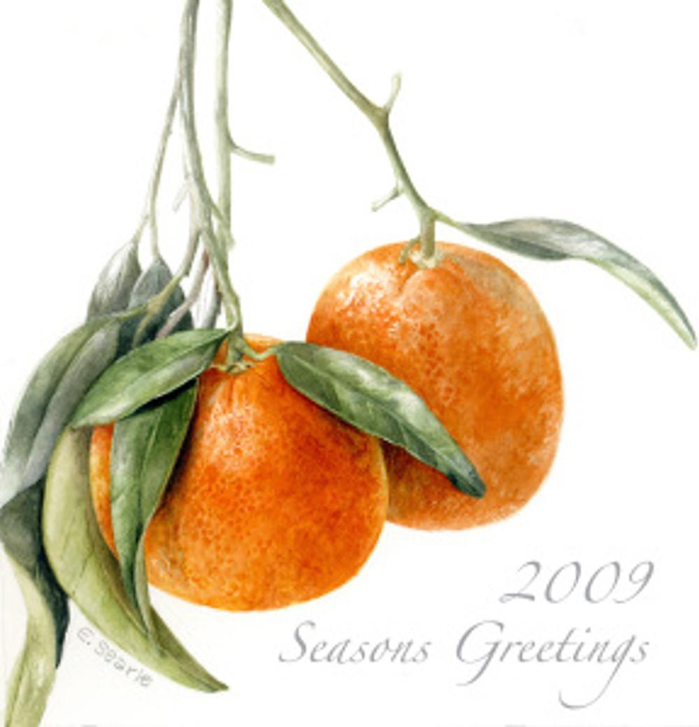 Season's Greetings from Elaine Searle