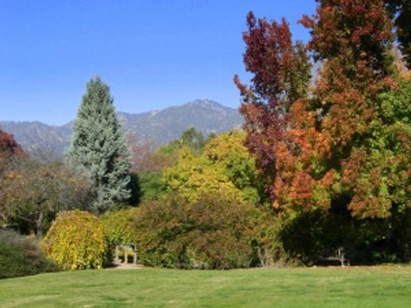 Trees at the LA Arboretum. © 2016, LA Arboretum.