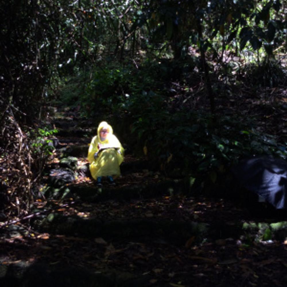 Arillyn Moran-Lawrence working on Stelechocarpus burahol, aka the Keppel Tree, while sitting on the steps in the Waimea Valley Botanical Gardens, Malesia Gardens, North Shore, Oahu, HI. Photographer: Michael Tyau, © 2017.