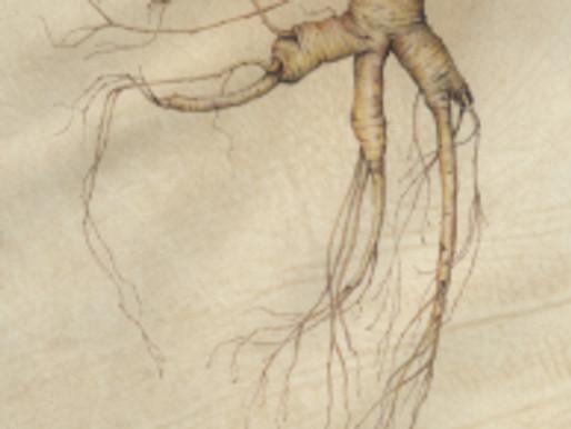 Denise Walser-Kolar Workshop: Roots and Leaves on Vellum or Paper