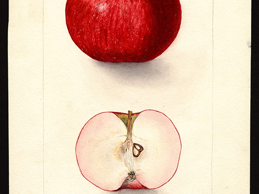 Washington Post Article about the US Agriculture Department Paintings of Fruits and Nuts