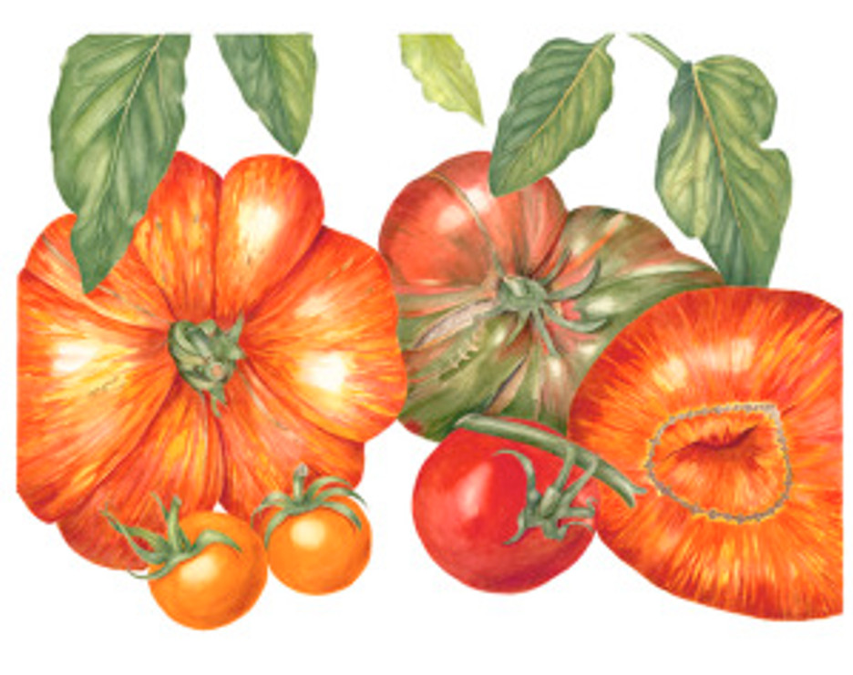 """""""Tomatoes"""", © 2010, Sally Jacobs, all rights reserved."""