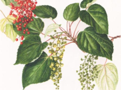 "Impressions of ""Flora Japonica"" at the Royal Botanic Gardens, Kew, London"