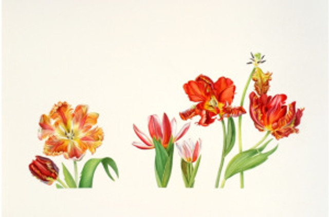 Tulip Parade, watercolor by Anita Walsmit Sachs, © 2016, all rights reserved.