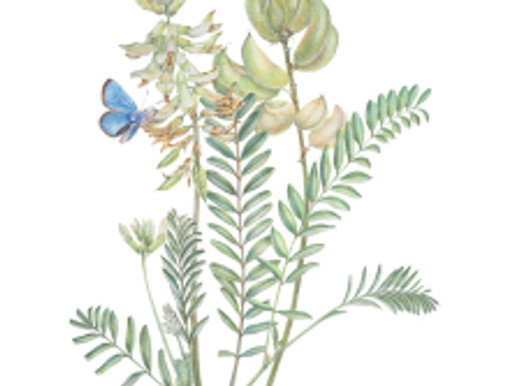 """Estelle De Ridder Exhibition of """"The Flora of the Madrona Marsh"""""""