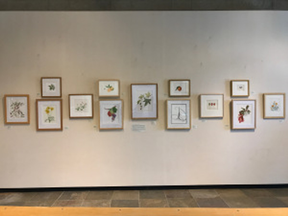 """""""Inspired by California"""" by the Botanical Artists Guild of Southern California, in the Brody Botanical Center at The Huntington."""