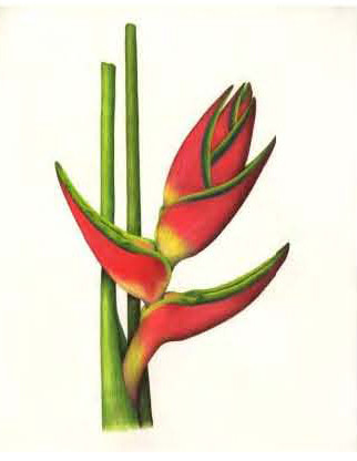 Thumbnail of colored pencil artwork by Cristina Baltayian, © 2013, all rights reserved.