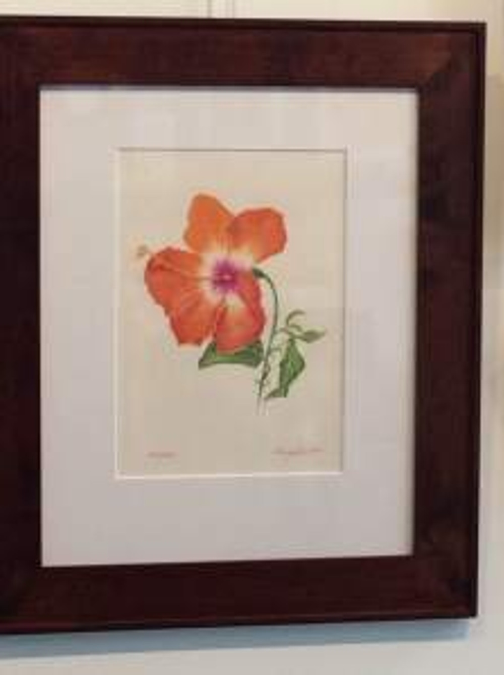 Hibiscus, colored pencil on paper by Nancy Grubb, © 2015, all rights reserved.