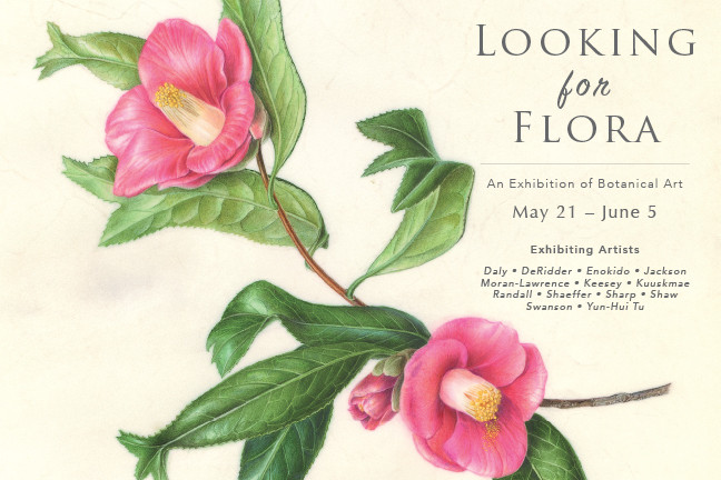 "Invitation postcard for ""Looking for Flora,"" Roger's Gardens. Watercolor on vellum by Akiko Enokido, Camellia japonica 'Kingyoba tsubaki', © 2016, all rights reserved. Download the complete postcard here."