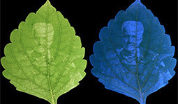 Roger Hangarter, Ph.D., Chancellor's Professor of Biology, Indiana University, on light and the process of photosynthesis.