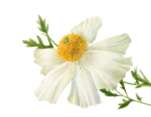 Botanical Art Worldwide: Linking People with Plants through Botanical Art
