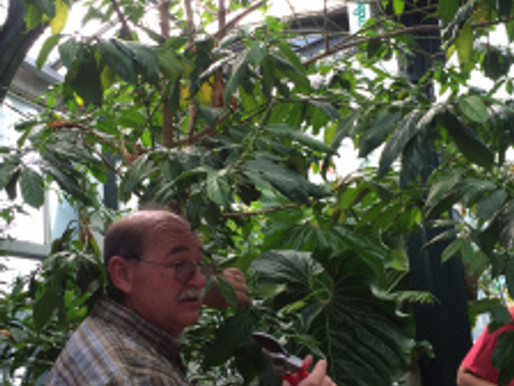 Tree Workshop at The Huntington