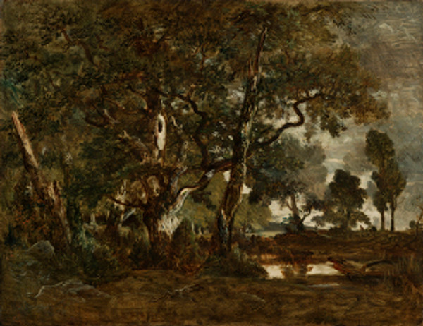 Forest of Fontainebleau, Cluster of Tall Trees Overlooking the Plain of Clair-Bois at the Edge of Bas-Bréau; Théodore Rousseau (French, 1812 - 1867); France; about 1849 - 1852; Oil on canvas; 90.8 × 116.8 cm (35 3/4 × 46 in.); 2007.13