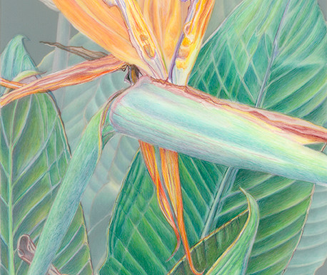 """Kathie Miranda to Teach a BAGSC """"Colored Pencil on Film"""" in January, 2017"""