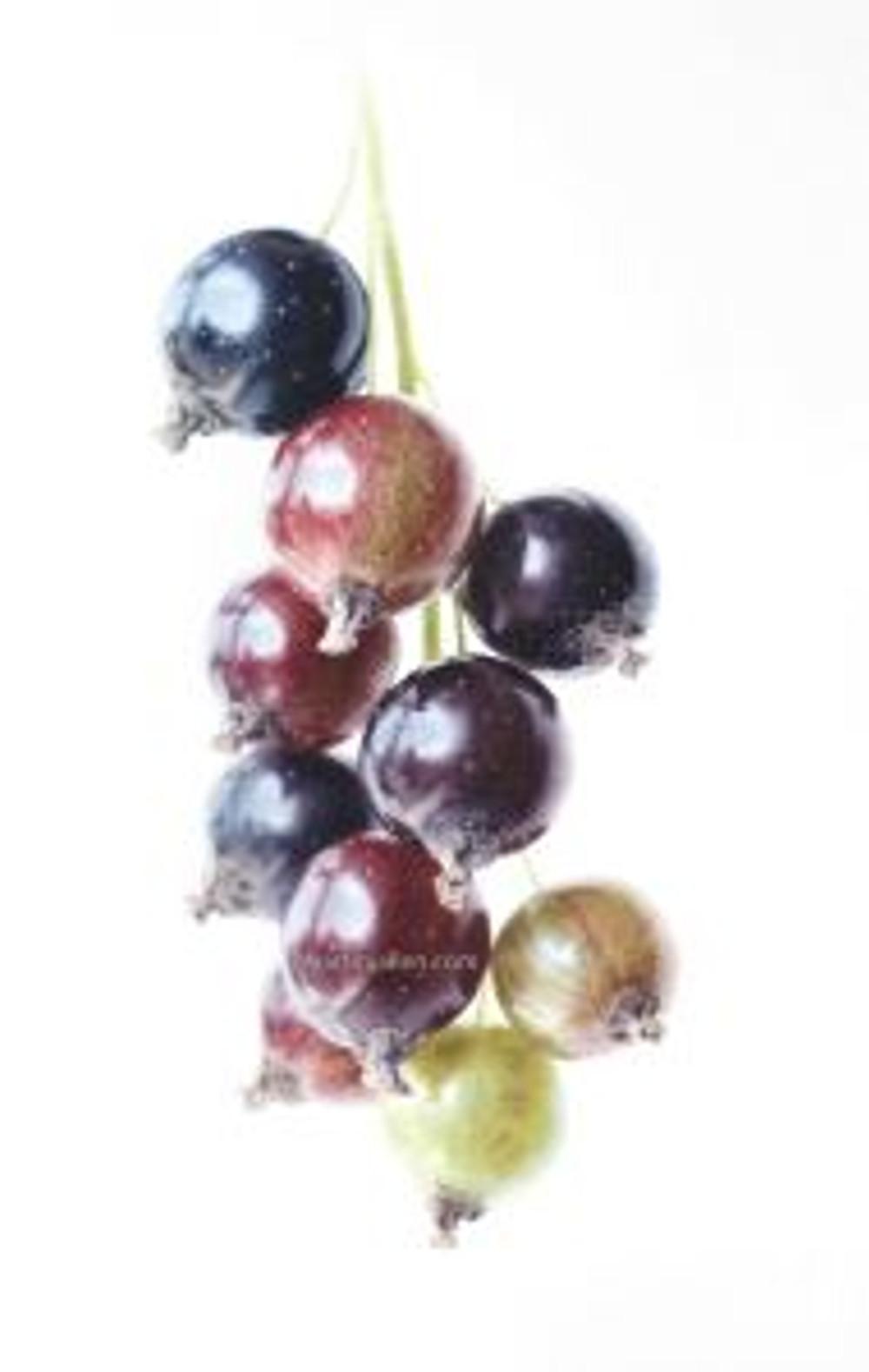 """Every Berry"", watercolor, © 2017, Martin J. Allen."