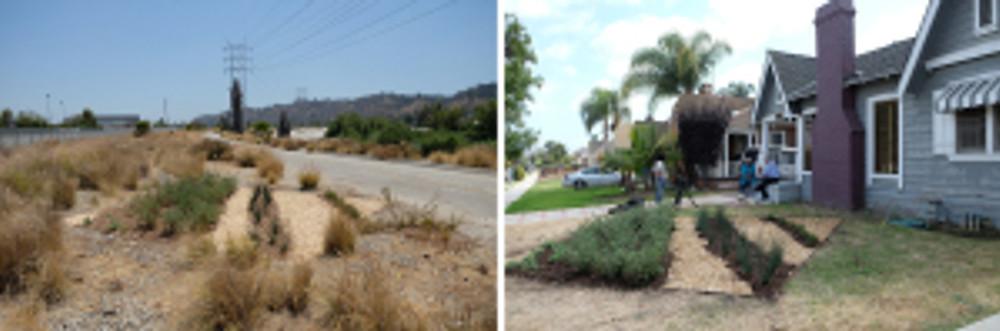 TTB plot 111-CF, Bowtie demonstration garden and South LA mirror installation.