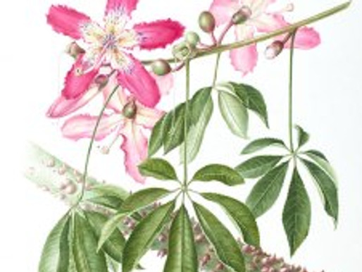 """Call for Entries for BAGSC's Arboretum Library Exhibition, """"Capturing the Arboretum: The Art of Bota"""