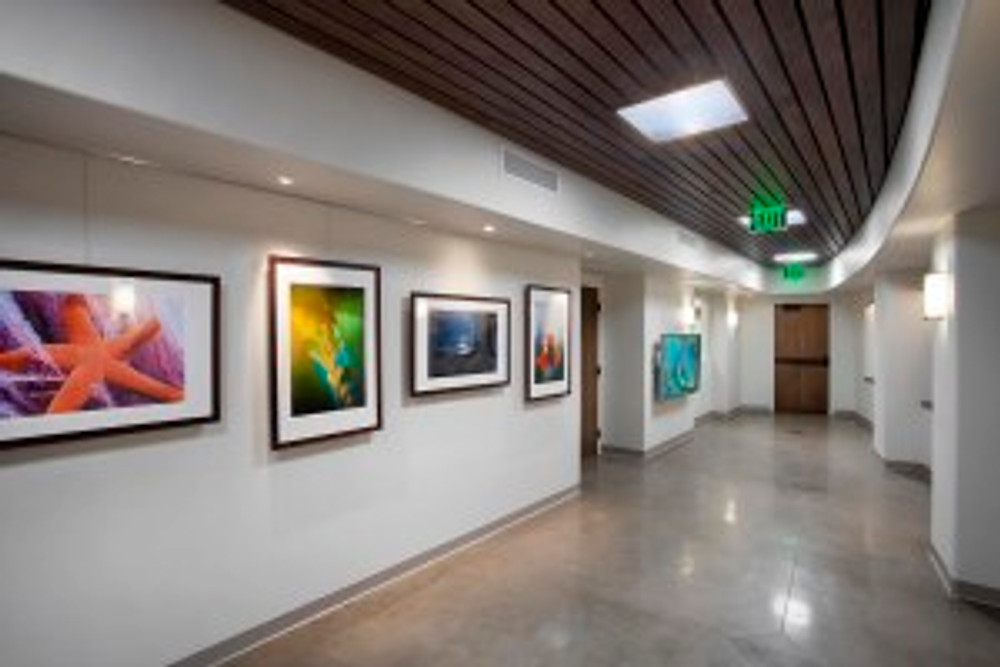 """A view of the gallery at the Santa Barbara Zoo where the """"Zoo in Bloom"""" exhibition will hang."""