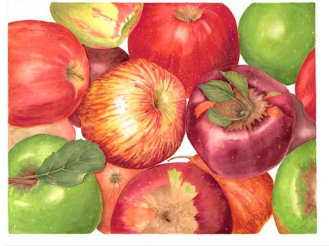 Sally Jacobs, Apples