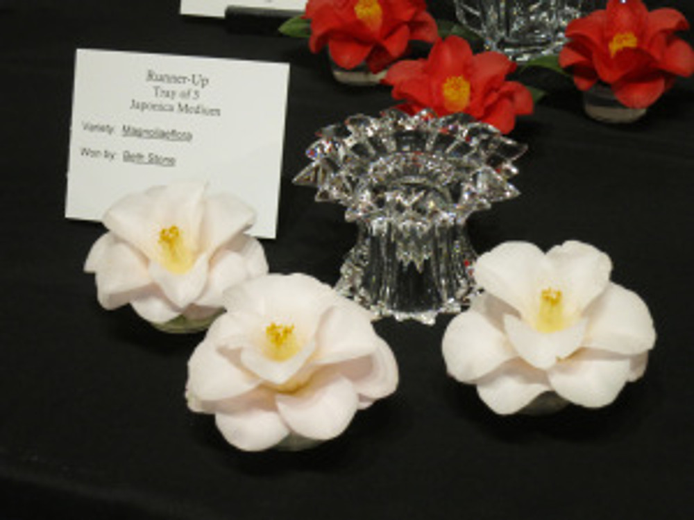 In addition to participating in the botanical art exhibition, Beth Stone won five prizes for her outstanding Camellia flowers.