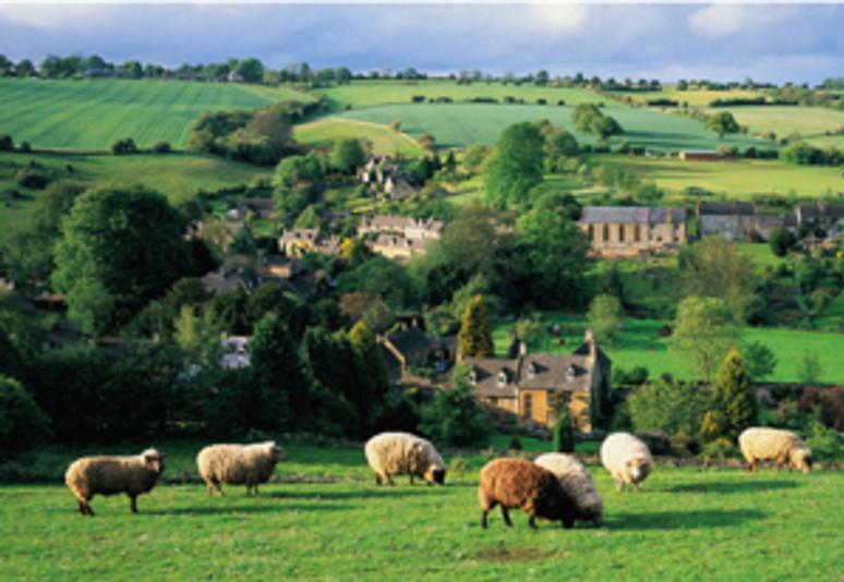 England, Gloucestershire,   Cotswolds, Naunton, sheep grazing in field